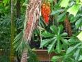 17 Kew Gardens 011