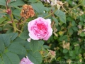 17 Kew Gardens 015