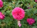 17 Kew Gardens 021