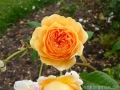 17 Kew Gardens 022