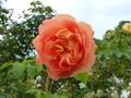 17 Kew Gardens 024