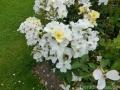 17 Kew Gardens 025