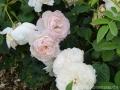 17 Kew Gardens 026