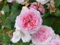 17 Kew Gardens 027