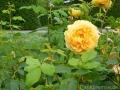 17 Kew Gardens 028