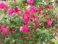 17 Kew Gardens 030
