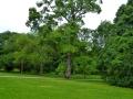 17 Kew Gardens 031