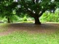 17 Kew Gardens 034