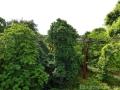 17 Kew Gardens 045