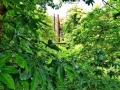 17 Kew Gardens 048