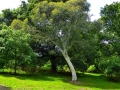 17 Kew Gardens 052