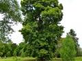 17 Kew Gardens 066