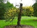 17 Kew Gardens 070